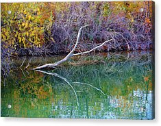 Cool Reflections Acrylic Print by Li Newton