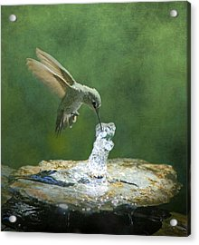 Cool Refreshment Acrylic Print by Angie Vogel