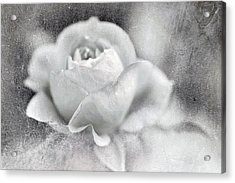 Acrylic Print featuring the photograph Cool Rose by Annie Snel