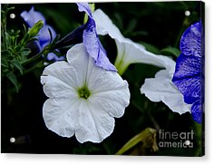 Acrylic Print featuring the photograph Cool Summer Petunias by Wilma  Birdwell