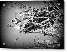 Cooling Off  B W Acrylic Print by Sheri McLeroy