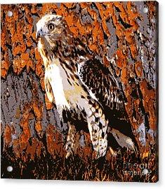 Cooper's Hawk Acrylic Print by Judy Palkimas