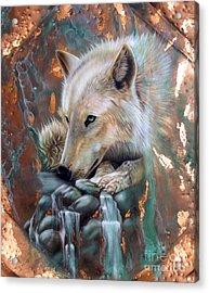 Copper Arctic Wolf Acrylic Print by Sandi Baker