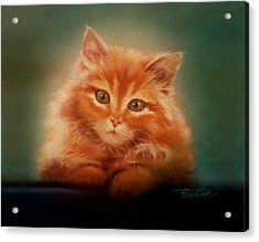 Copper-colored Kitty Acrylic Print by Evie Cook