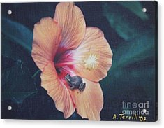 Coqui  Acrylic Print by The Art of Alice Terrill