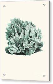 Coral Blue Acrylic Print by Patruschka Hetterschij