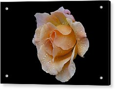 Acrylic Print featuring the photograph Coral Cutie by Doug Norkum