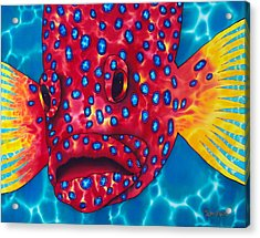 Coral Grouper Acrylic Print by Daniel Jean-Baptiste