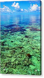 Coral Reef Near The Island At Peaceful Day. Maldives Acrylic Print by Jenny Rainbow