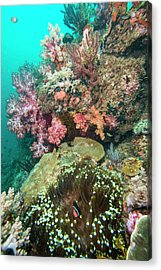 Coral Reef With An Anemonefish Acrylic Print