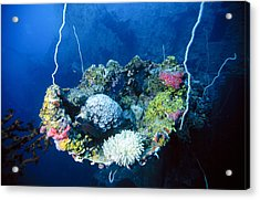Corals On Ship Wreck Acrylic Print