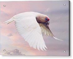 Corella In Flight Acrylic Print