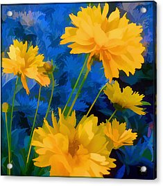 Coreopsis - Yellow And Blue Acrylic Print