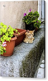 Corfu, Greece Orange Tabby Cat Lays Acrylic Print