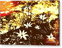 Acrylic Print featuring the photograph Coriopsis by Denise Tomasura