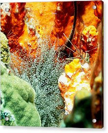 Acrylic Print featuring the photograph Corkscrew Anemone Grove by Amy McDaniel