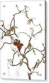 Corkscrew Acrylic Print by Anne Gilbert