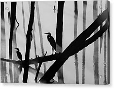 Cormorant And The Heron  Bw Acrylic Print