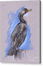 Cormorant Acrylic Print by MM Anderson