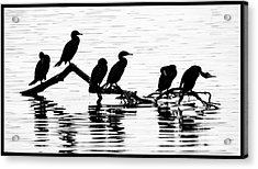 Acrylic Print featuring the photograph Cormorant Silhouettes by Geraldine Alexander