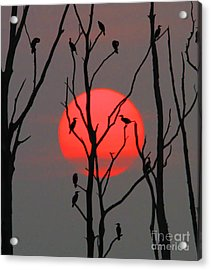 Cormorants At Sunrise Acrylic Print by Roger Becker