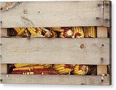 Corn Cobs In Corn Crib At Indiana State Acrylic Print