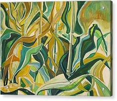 Corn Curves Acrylic Print by Catherine Jones Davies