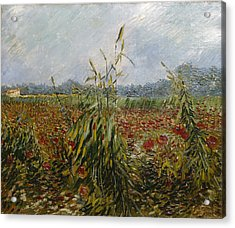 Corn Fields And Poppies, 1888 Acrylic Print by Vincent van Gogh