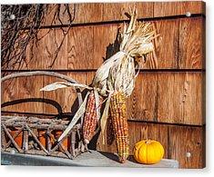 Corn Acrylic Print by Guy Whiteley