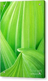 Acrylic Print featuring the photograph Corn Lily Leaf Detail Yosemite Np California by Dave Welling
