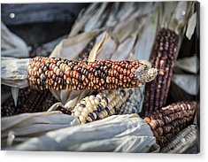 Corn Of Many Colors Acrylic Print