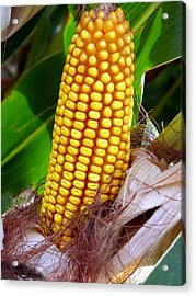 Acrylic Print featuring the photograph Corn On The Cob by Jeff Lowe