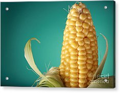 Corn On The Cob Acrylic Print by Sharon Dominick
