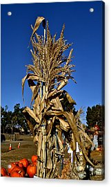 Acrylic Print featuring the photograph Corn Stalk by Michael Gordon