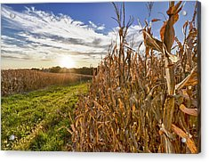Cornfield At Sunset Acrylic Print
