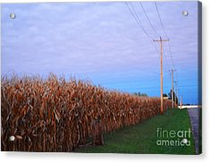 Cornfield In Autumn Acrylic Print by Luther Fine Art