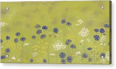 Cornflowers And Queen Anne's Lace Acrylic Print