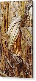 Corny Acrylic Print
