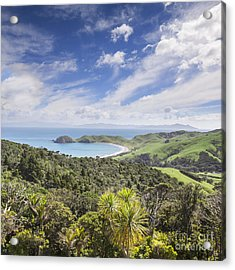 Coromandel Port Jackson New Zealand Acrylic Print