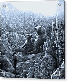 Corona Del Mar Seals Statue - Black And White Acrylic Print by Gregory Dyer