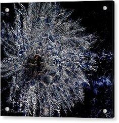 Cosmic Dryas Acrylic Print