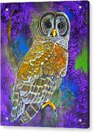 Cosmic Owl Acrylic Print