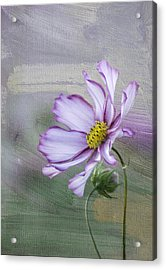 Cosmo Of The Garden Acrylic Print by Kristal Kraft