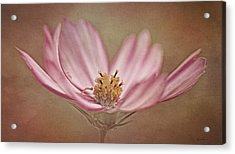 Acrylic Print featuring the photograph Cosmos by Ann Lauwers