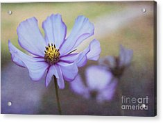 Cosmos Dream Acrylic Print