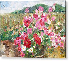 Cosmos In The Field Acrylic Print by Becky Kim