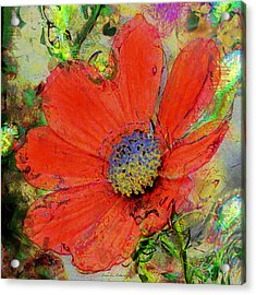 Cosmos Flower No. 1 Acrylic Print