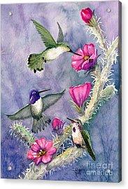 Costa Hummingbird Family Acrylic Print