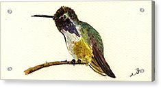Costa S Hummingbird Acrylic Print by Juan  Bosco