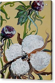 Cotton Boll Solo Acrylic Print by Eloise Schneider